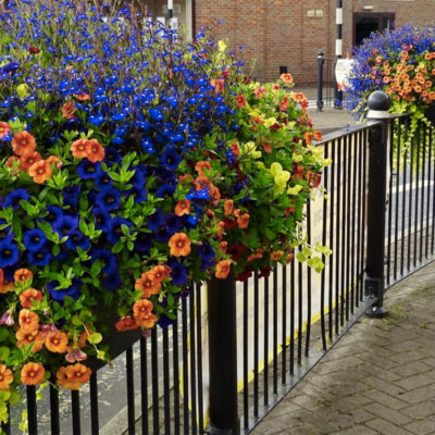 Town In Bloom
